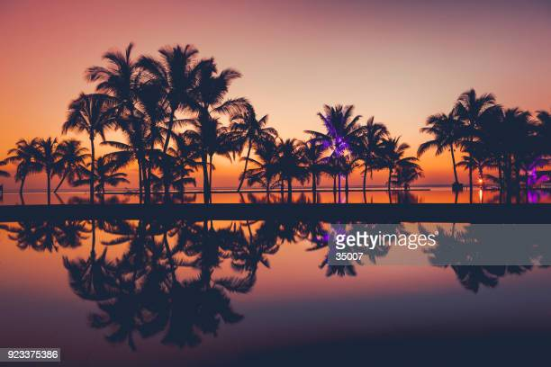 palm tree silhouettes at sunset, africa - island stock pictures, royalty-free photos & images