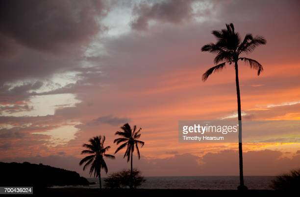 palm tree silhouettes, ocean, pink and gold sky at sunset - timothy hearsum fotografías e imágenes de stock