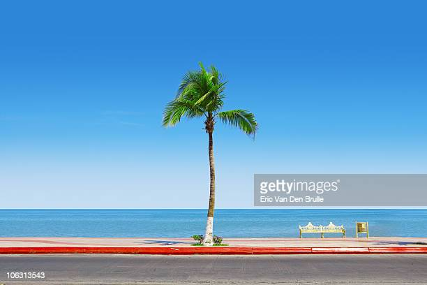 palm tree, sky and water - eric van den brulle imagens e fotografias de stock