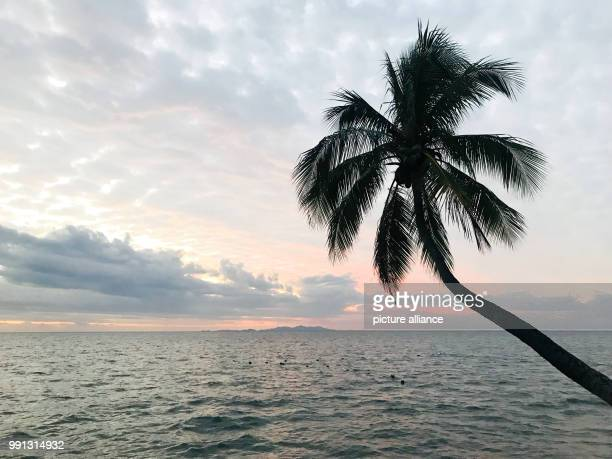 A palm tree stretches out into the sea in Nadi Fiji islands of Viti Levu Fiji Islands 15 October 2017 The bottled still mineral water from the Fiji...