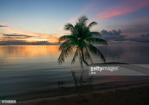 palm tree sunset, thailand - ko samui stock photos and pictures