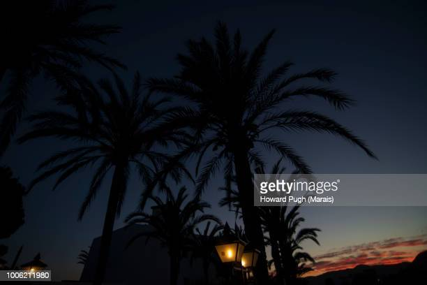 Palm Tree Twilight