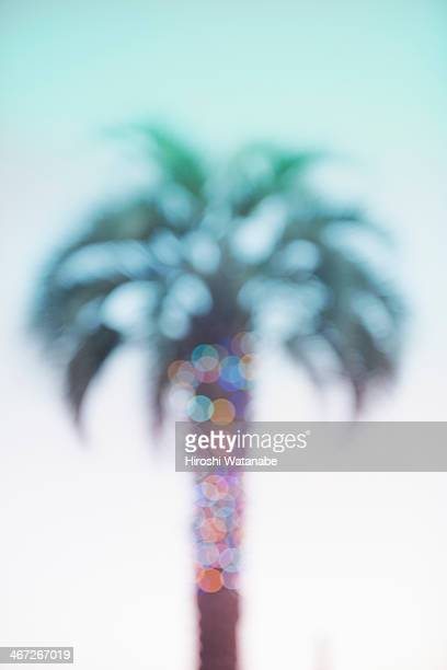 Palm tree with a lot of grow