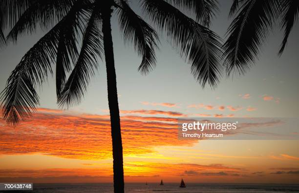 palm tree with brilliant orange sky and sailboats on the ocean at sunset - timothy hearsum stock pictures, royalty-free photos & images