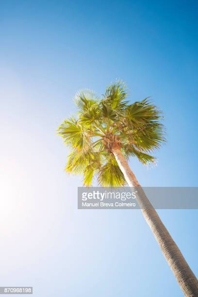 Palm tree with clear sky