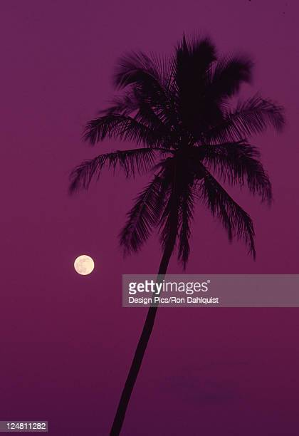 Palm tree with moon in a bright pink sky.