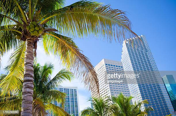 palm tree with office buildings in miami, fl - downtown miami stock pictures, royalty-free photos & images