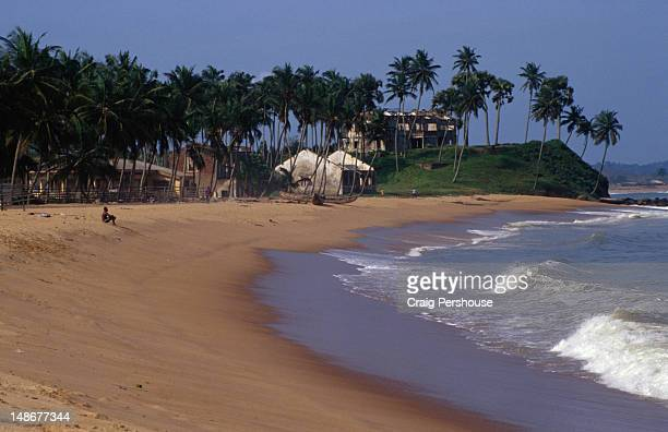 palm tree-lined beach. - côte d'ivoire stock pictures, royalty-free photos & images