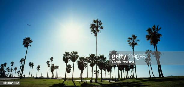 palm trees against blue sky at venice beach - southern california stock pictures, royalty-free photos & images