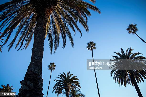 palm trees against blue sky, beverly hills - elektronische organiser stockfoto's en -beelden