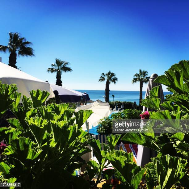 palm trees against blue sky - albufeira stock photos and pictures