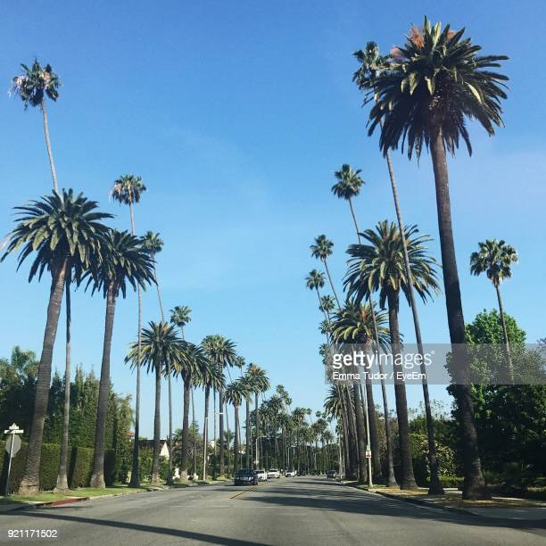 palm trees against clear blue sky - beverly hills california stock pictures, royalty-free photos & images