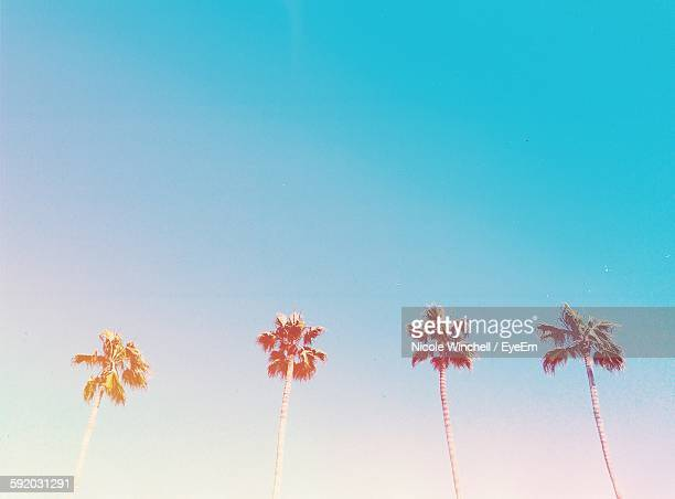 palm trees against clear sky - palm tree stock pictures, royalty-free photos & images
