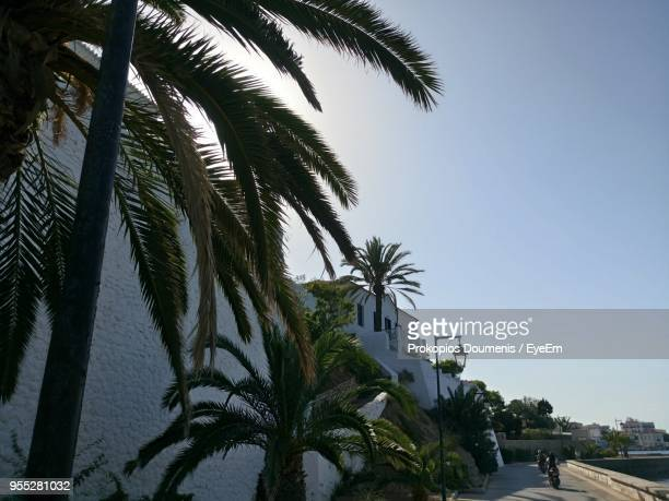 palm trees against clear sky - spetses stock pictures, royalty-free photos & images