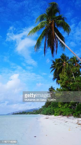 palm trees against cloudy sky - saka stock pictures, royalty-free photos & images