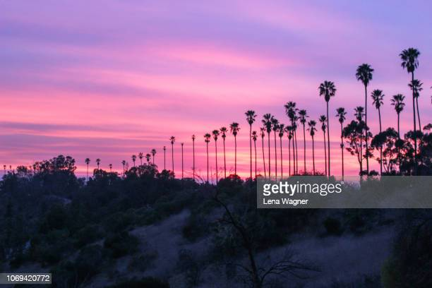 palm trees against hillside sunset - city of los angeles stock pictures, royalty-free photos & images