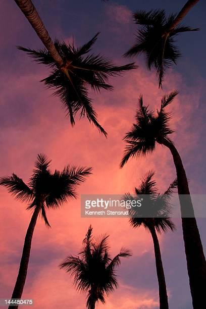 palm trees against pink sky - playa tamarindo fotografías e imágenes de stock