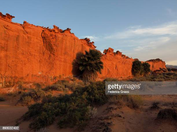 Palm Trees Against Sandstone Wall, Little Finland, Nevada