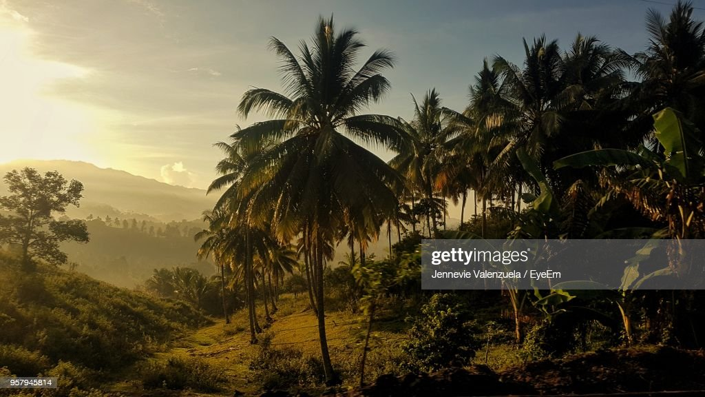 Palm Trees Against Sky During Sunset : Stock Photo