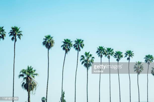 palm trees against sky - de stad los angeles stockfoto's en -beelden