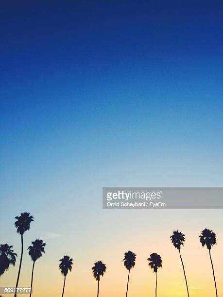 palm trees against sky - indio california stock pictures, royalty-free photos & images
