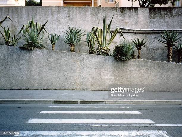 palm trees against wall - curb stock pictures, royalty-free photos & images