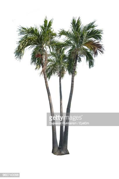 palm trees against white background - palm tree stock pictures, royalty-free photos & images