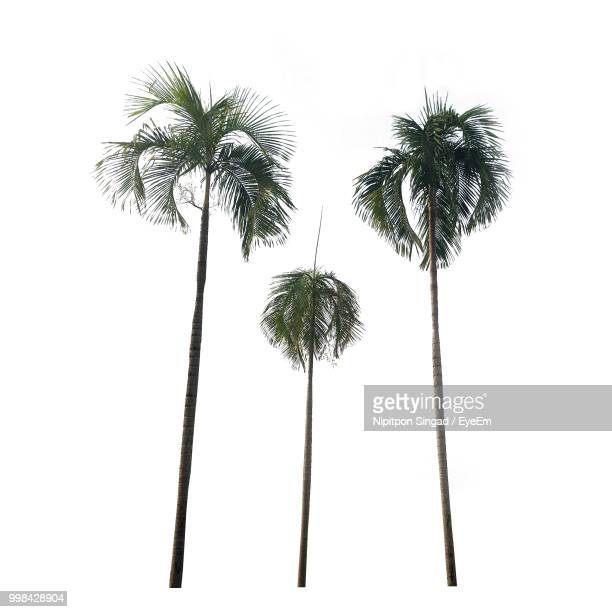palm trees against white background - tropical tree stock pictures, royalty-free photos & images