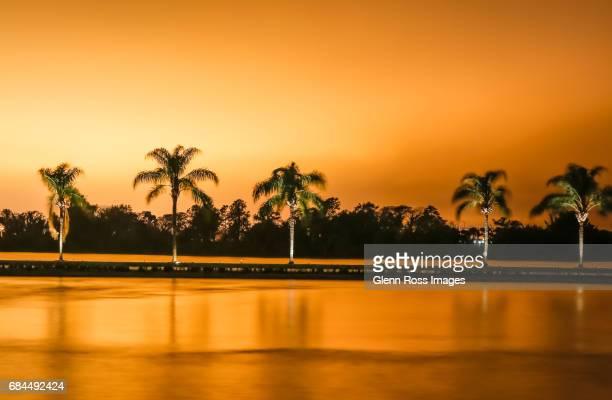 Palm Trees along a Lake Shoreline