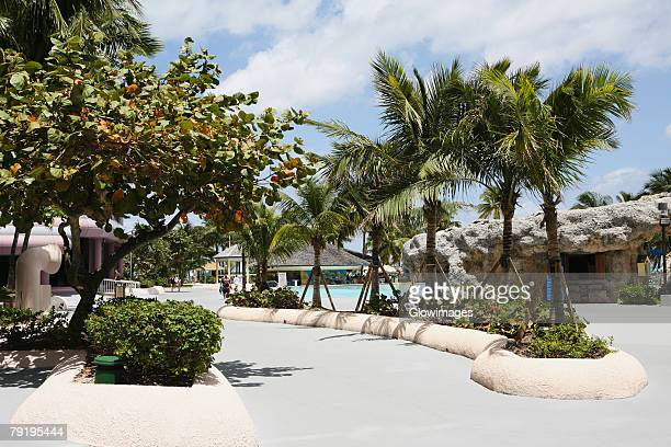 palm trees along a path at a tourist resort, cable beach, nassau, bahamas - cable beach bahamas stock photos and pictures