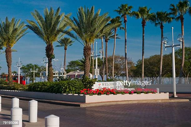 palm trees along a road, st. petersburg, florida, usa - st. petersburg florida stock photos and pictures