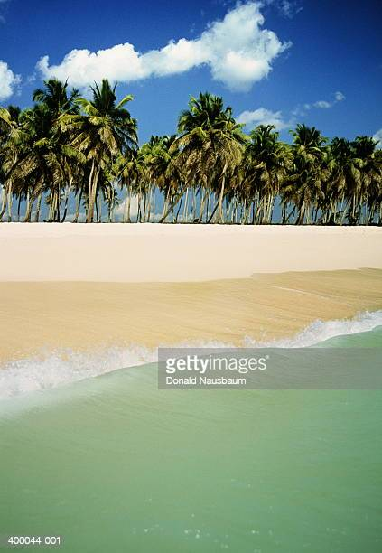 Palm trees along empty beach,calm sea in foreground