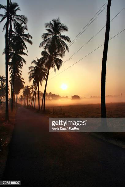 palm trees along road against sky during sunset - goa stock photos and pictures