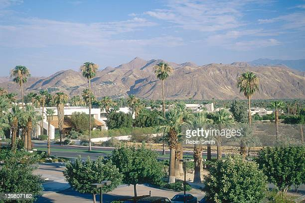 palm trees along road in residential area, palm springs, california, usa - palm springs stock pictures, royalty-free photos & images
