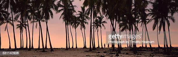 palm trees along the beach at sunset - timothy hearsum stockfoto's en -beelden