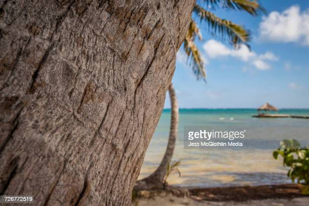 Palm trees along the Caribbean in Belize