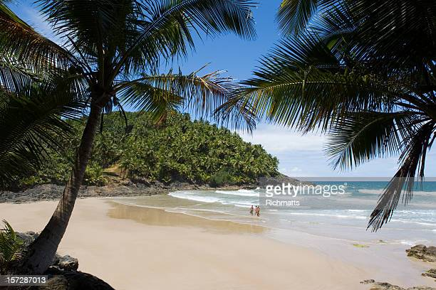 palm trees along the sands of a tropical beach in brazil - bahia state stock pictures, royalty-free photos & images