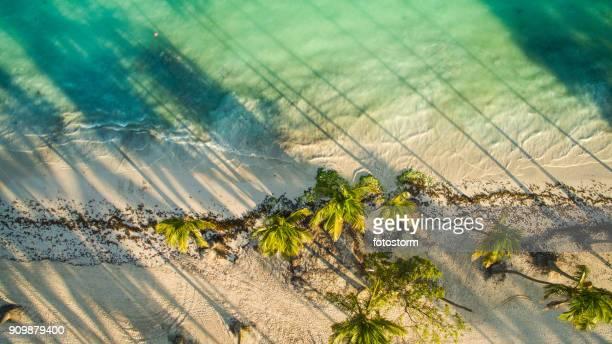 palmeras a lo largo de la playa - paisajes de republica dominicana fotografías e imágenes de stock
