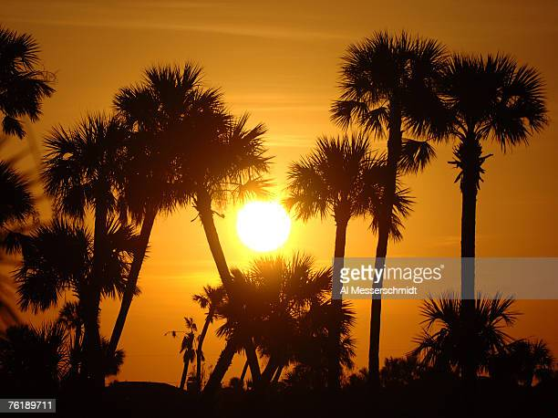 Palm trees and a setting sun on the horizon at the end of the Golden Eagle Pro Am at the 2006 Honda Classic at the Country Club at Mirasol in Palm...