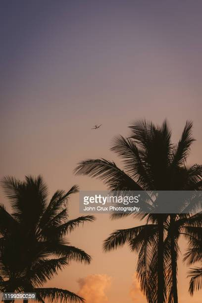 palm trees and airplane - cairns stock pictures, royalty-free photos & images