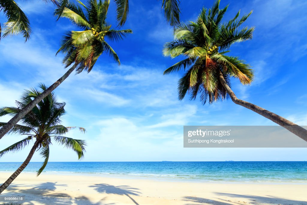 palm trees and amazing cloudy blue sky at tropical beach island in Indian Ocean. Coconut Tree with Beautiful and romantic beach in Chumphon , Thailand. Koh Tao popular tourist destination in Thailand. : Stock Photo