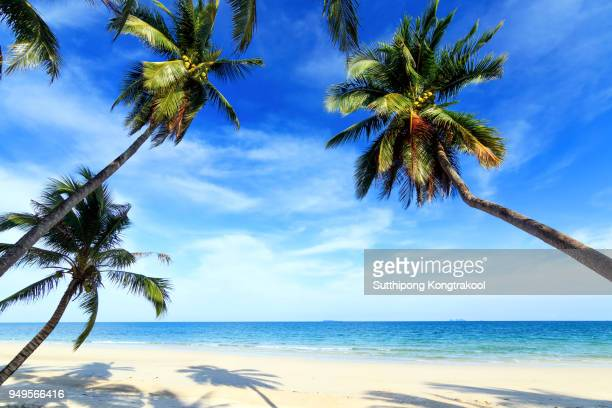 palm trees and amazing cloudy blue sky at tropical beach island in indian ocean. coconut tree with beautiful and romantic beach in chumphon , thailand. koh tao popular tourist destination in thailand. - idyllic stock-fotos und bilder