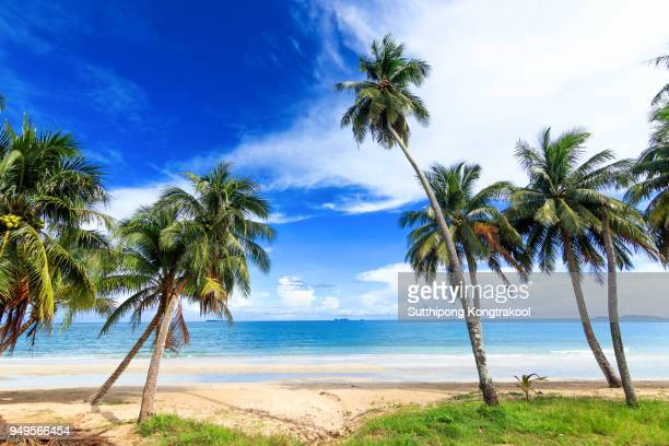 palm trees and amazing cloudy blue sky at tropical beach island in Indian Ocean. Coconut Tree with Beautiful and romantic beach in Chumphon , Thailand. Koh Tao popular tourist destination in Thailand.