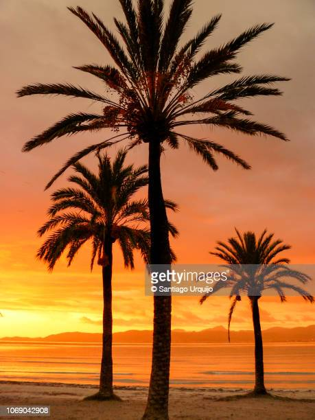 Palm trees and beach at sunrise