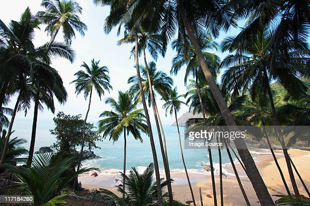 Palm trees and beach, Goa, India