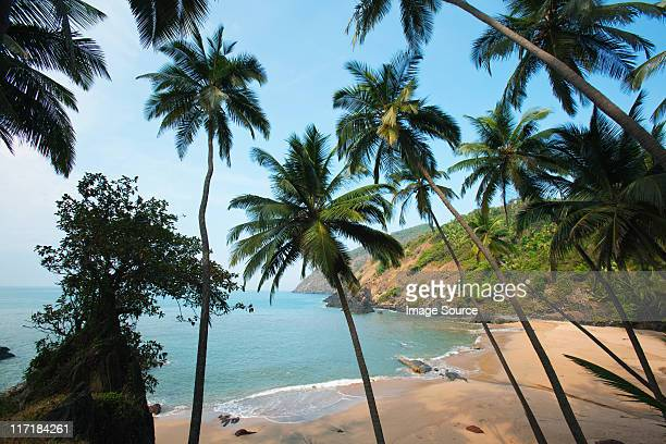 palm trees and beach, goa, india - goa stock pictures, royalty-free photos & images