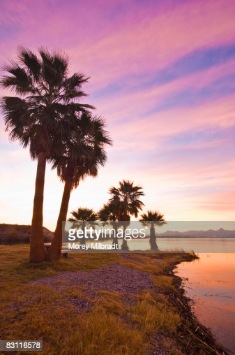 Palm trees and beach, Lake Havasu, Arizona, USA