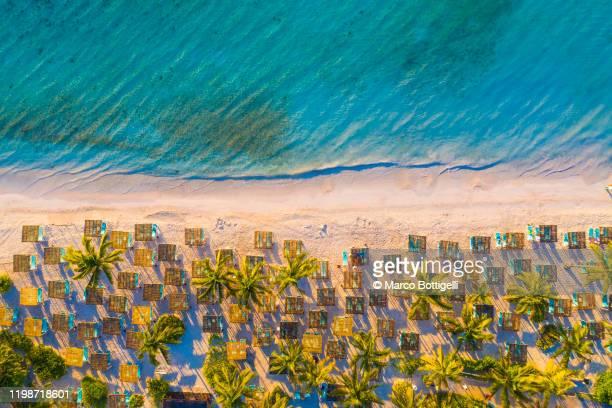 palm trees and beach loungers at akumal beach, mexico - paisajes de mejico fotografías e imágenes de stock