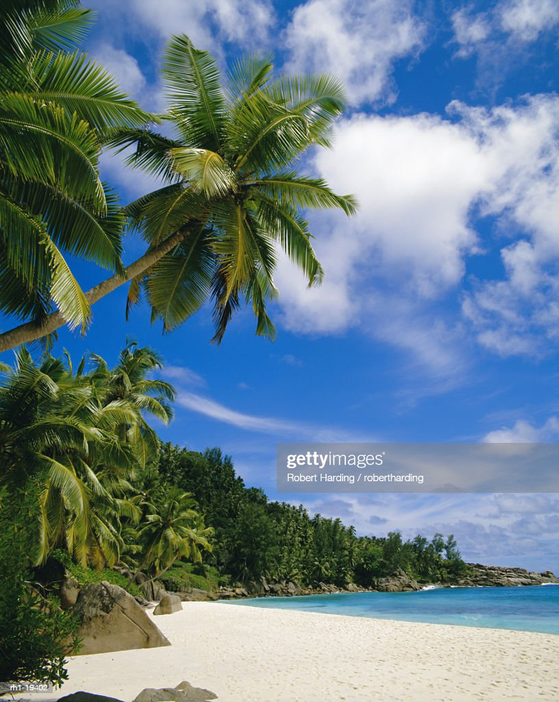Palm trees and beach, Seychelles : Foto de stock