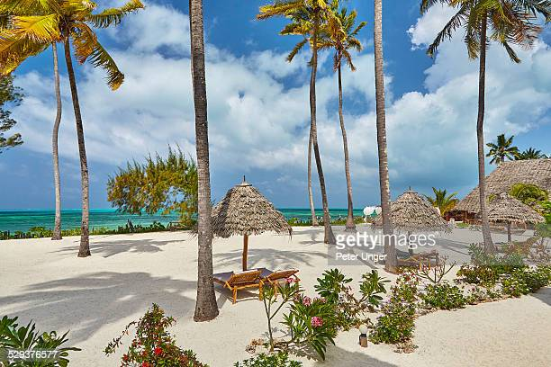 Palm trees and beach side lounges beside beach